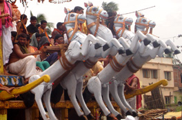 Horeses of Lord Jagannath's Chariot